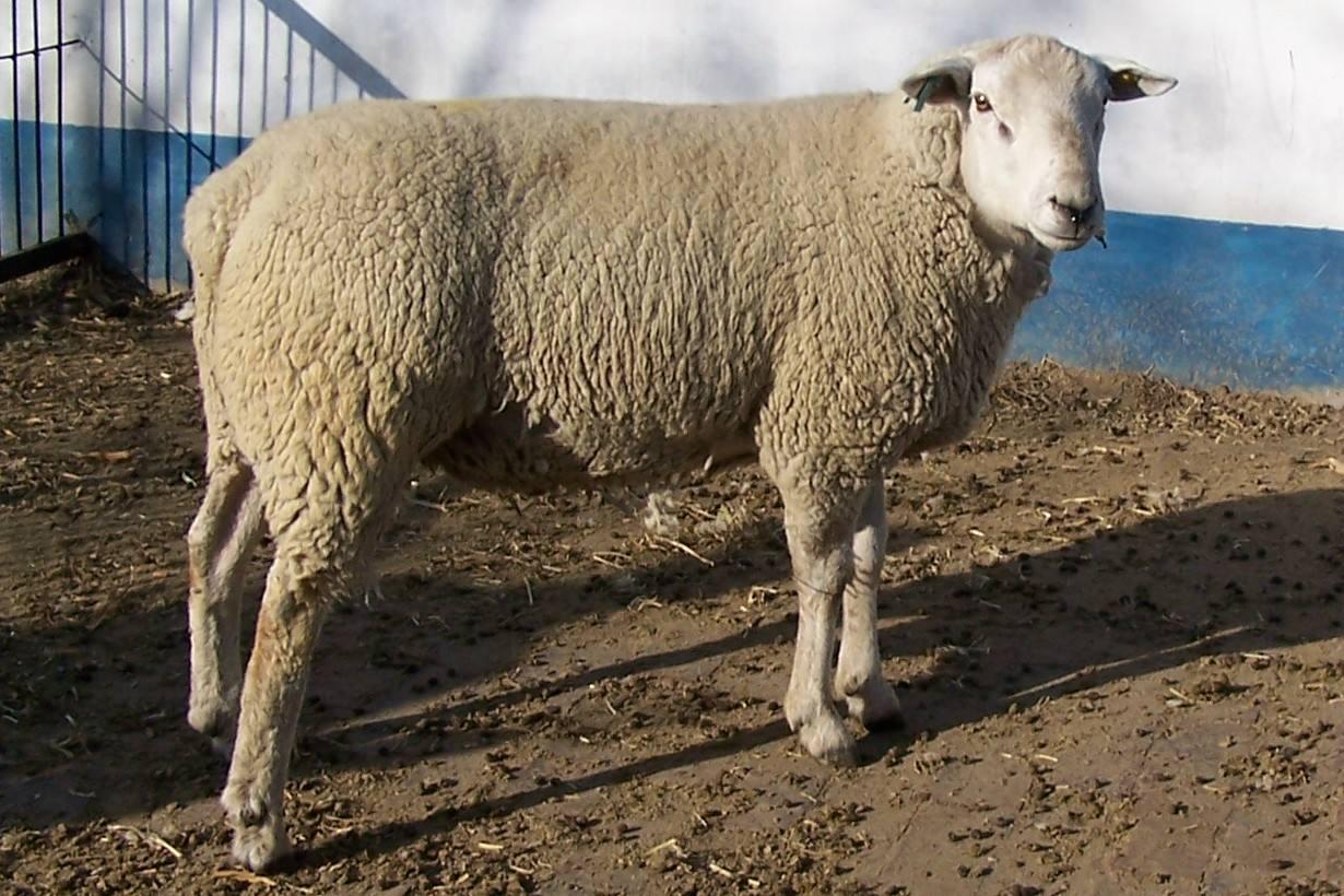 羊场水质处理方法
