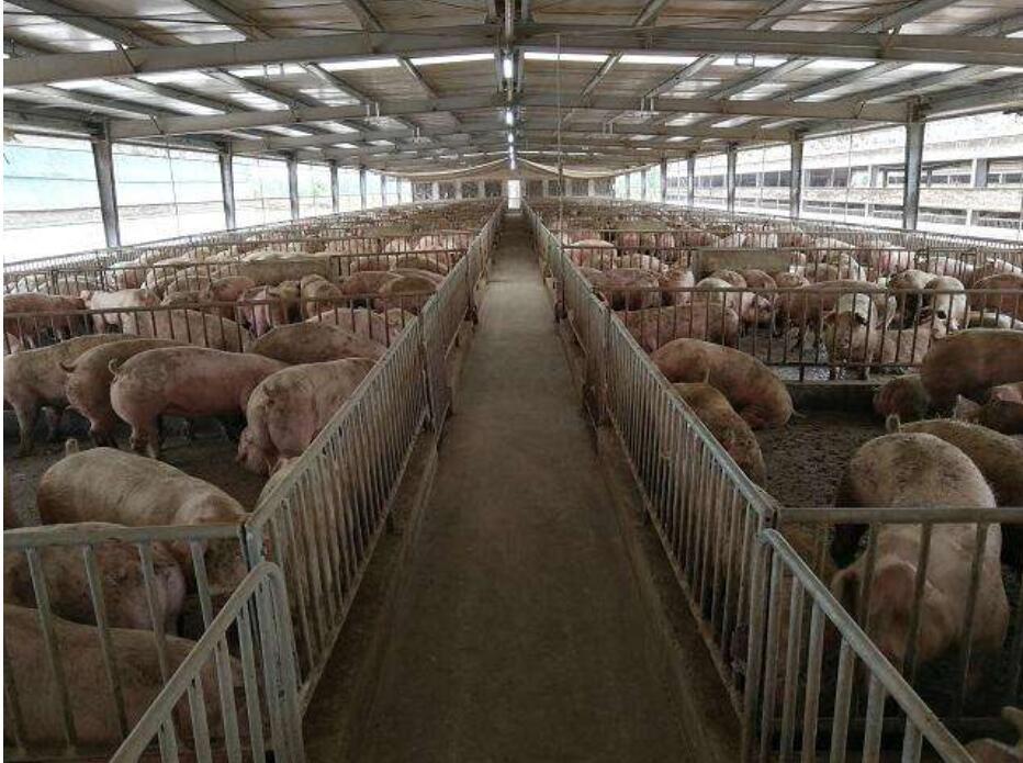猪场管理的误区