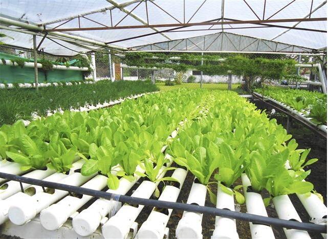 液体肥料市场发展