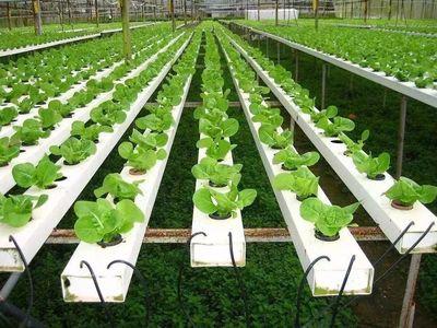 中国区域农业品牌赢得新时代的4X