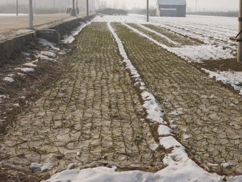 大蒜种植追肥技巧