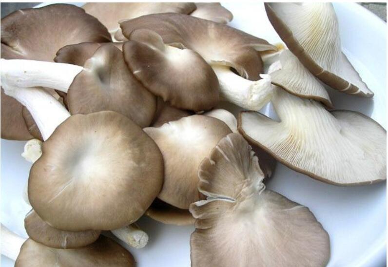杏鲍菇种植技术