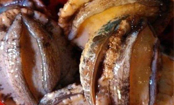 养殖鲍鱼的常见问题