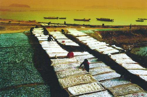 大银鱼的养殖技术
