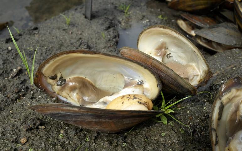 养殖河蚌的注意点