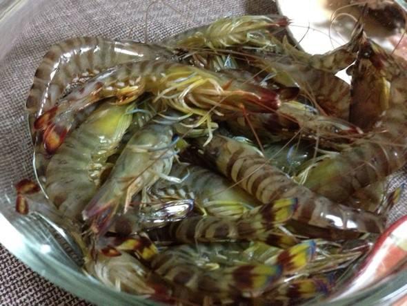 基围虾青虾病虫害防治技巧