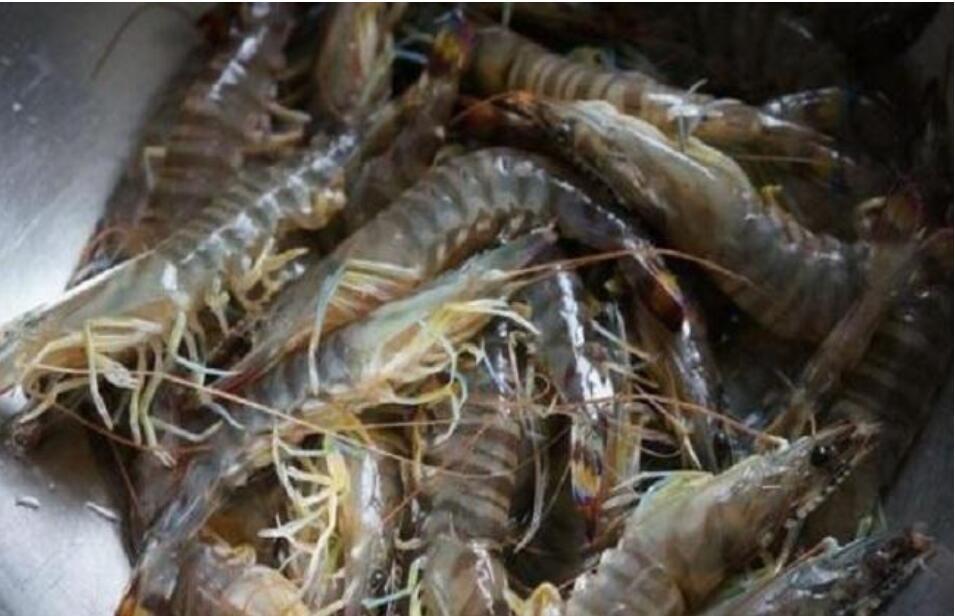 基围虾冬季养殖技术