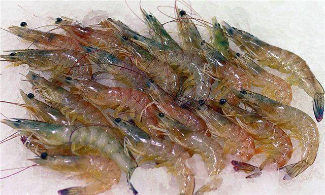 基围虾的营养价值