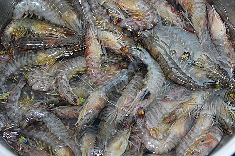 稻田养殖基围虾技术