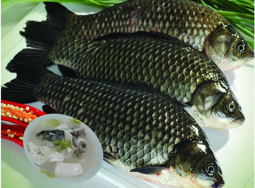鲫鱼和草鱼有区别吗