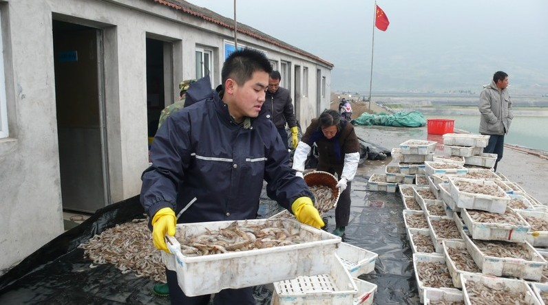 如何判断南美虾品质好坏