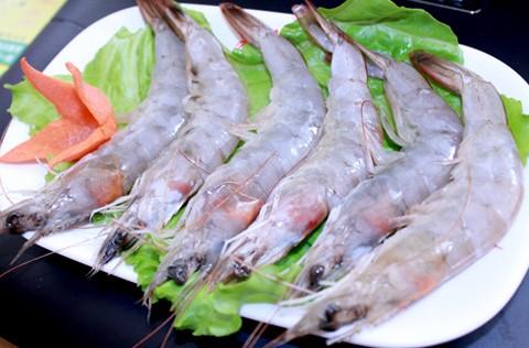 南美虾的养殖模式