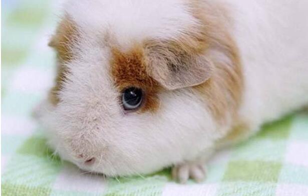 兔热病怎么样预防
