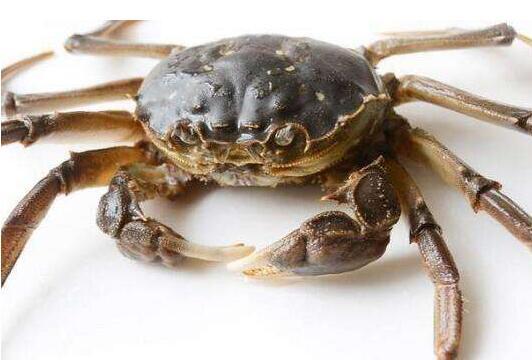 河蟹在蜕壳期要注意什么