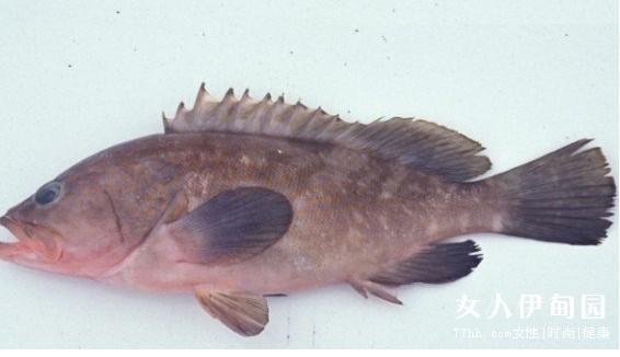 石斑鱼的养殖方式