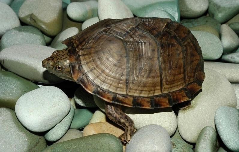 乌龟感冒了如何预防