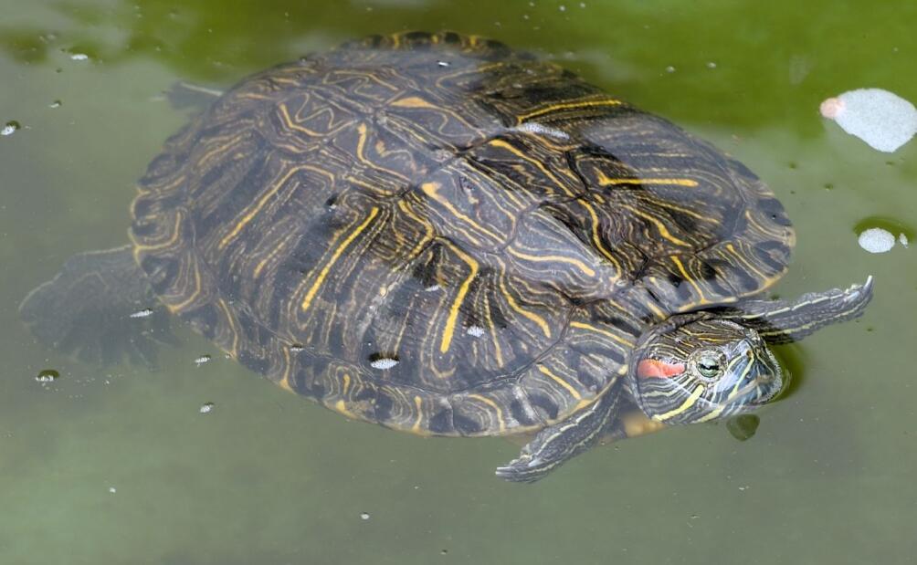 养殖乌龟对水有什么要求