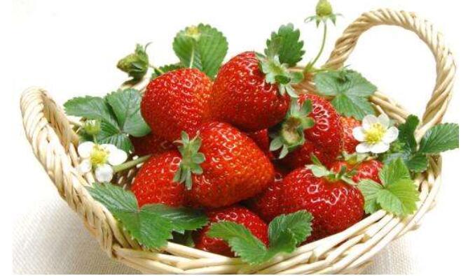 秋季草莓施底肥技巧