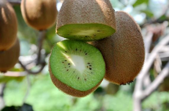 种植猕猴桃步骤