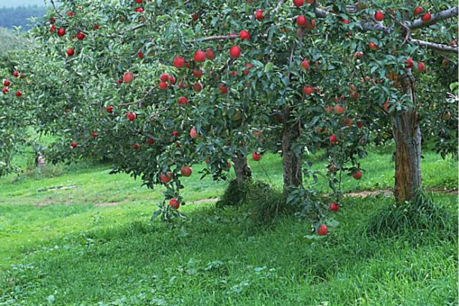 果树一般会用到什么农药