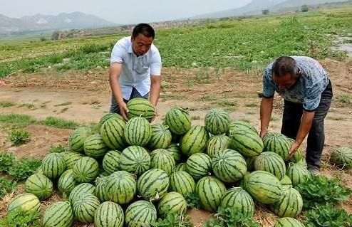 西瓜种子如何消毒