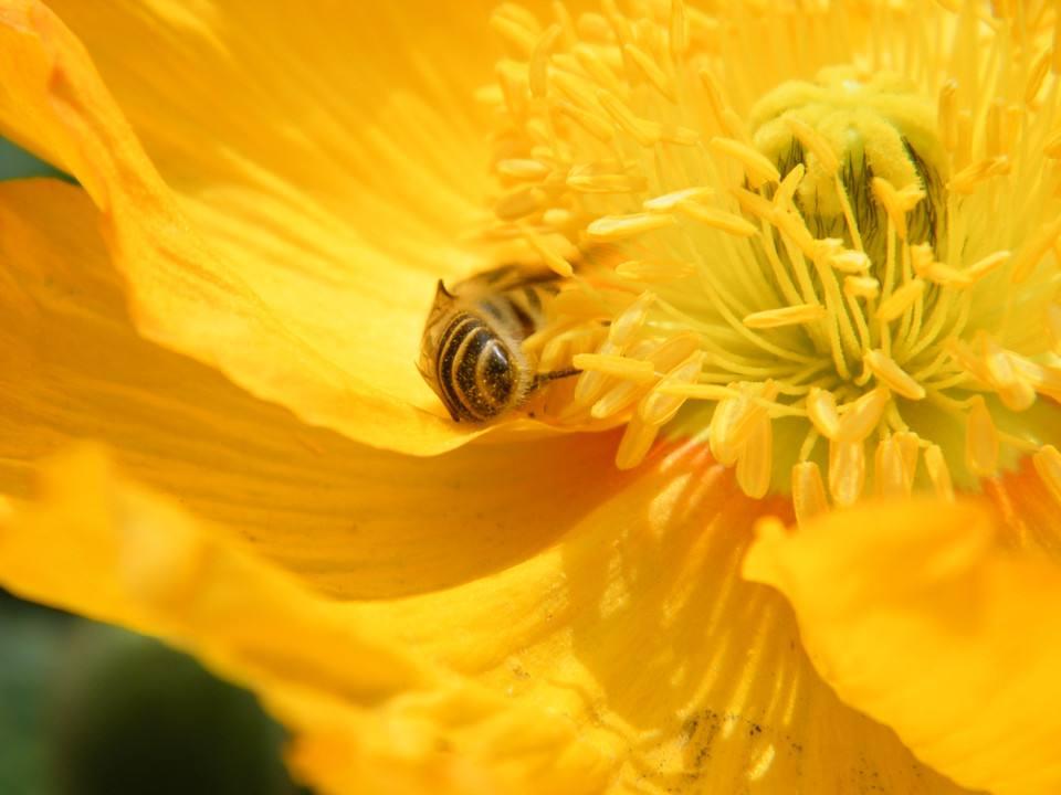蜜蜂饲料怎么样制作