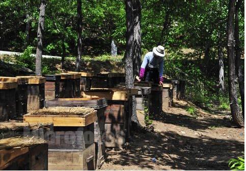 养殖蜜蜂温度如何控制