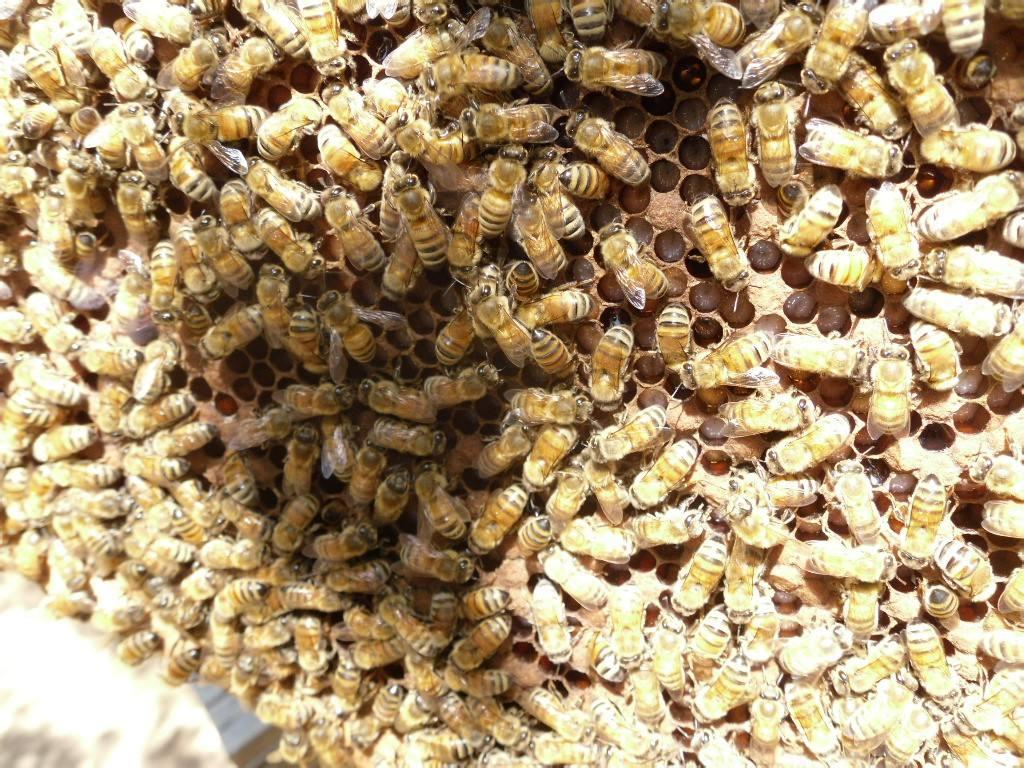 小蜂螨的预防技巧