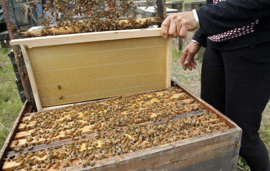 花粉能降血糖功效