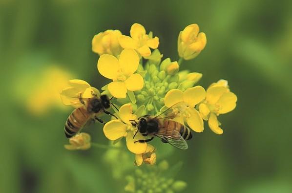 桶养中蜂技巧