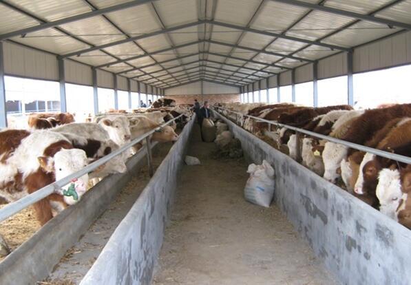 奶牛高产的15种方法