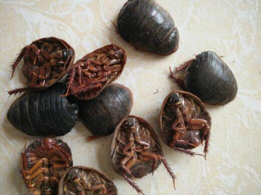 土元秸秆立体养殖方法
