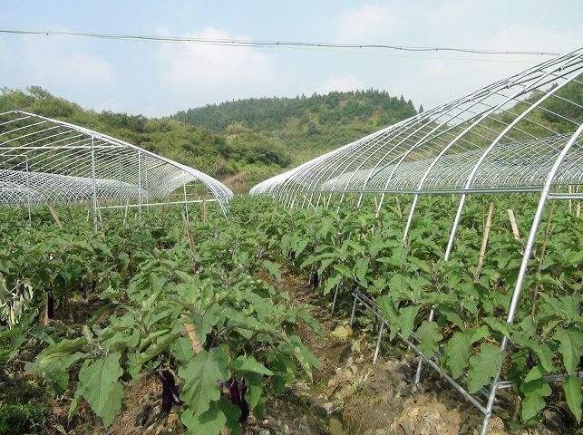农业种植常见的7种农药