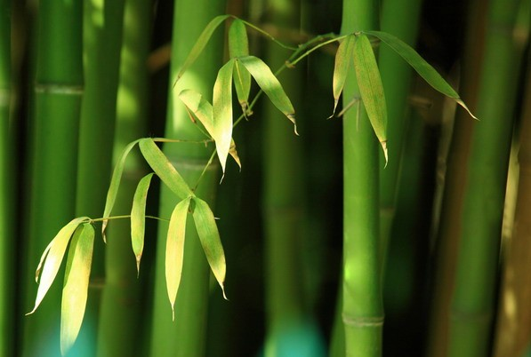 不同竹子发笋时间