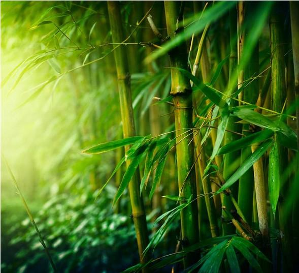 如何预防竹子开花