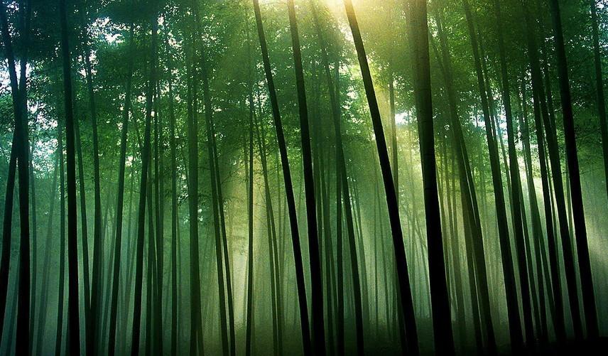 竹子的功效和作用