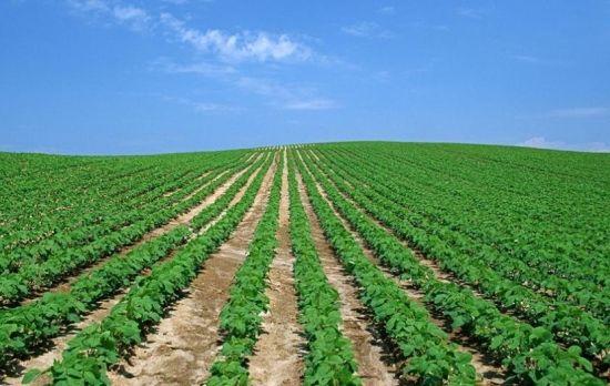 大豆的播种方法