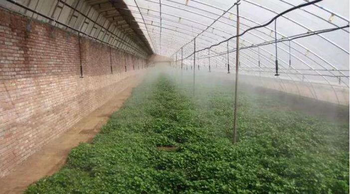 红薯育苗的方法