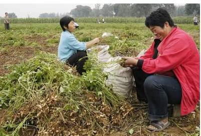 花生米的营养价值