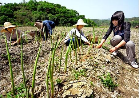 芦笋的病虫害种类