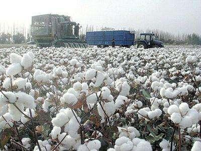 棉花种植有什么条件