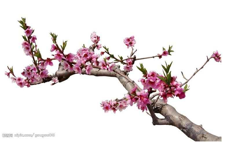 桃树种植技术