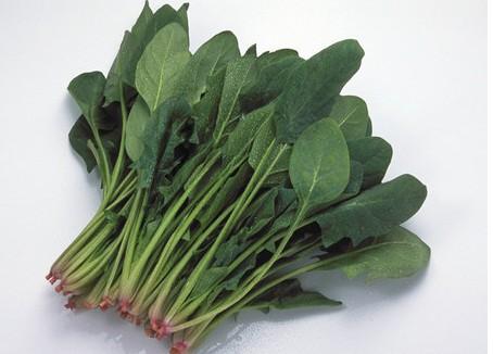 菠菜可以留种吗图片